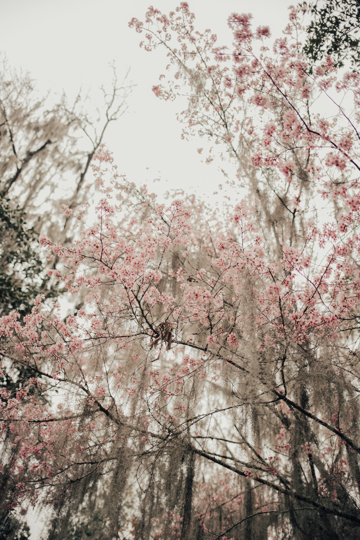 Something Sakura: Magnolia Gardens